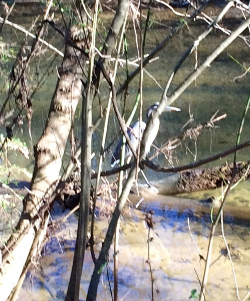 herron, stream beside Loch Haven Dog Park, Hoover, Alabama, dogdevotionals.com, Acts 3:19