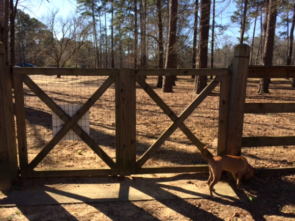wide gate, Loch Haven Dog Park, Hoover, Alabama