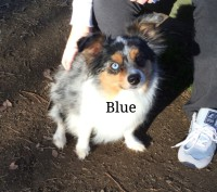 Blue Heeler terrier mix, Loch Haven Dog Park, dogdevotionals.com, Christian Devotionals