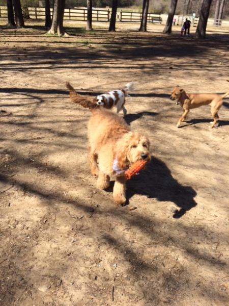 Bassett mix dog, pit bull mix, husky mix, shepherd mix, collie mix, Loch Haven Dog Park, Hoover Alabama, Lab mix dog, dogdevotionals.com, Christian Devotionals