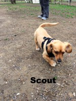 Tibetan Spaniel, Dachshund, Hoover AL, Loch Haven Dog Park, dogdevotionals.com