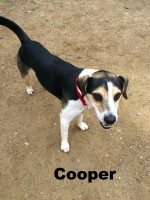 Beagle terrier mix, dogdevotionals.com, Loch Haven Dog Park, Hoover AL, Christian devotionals