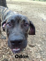 Preso Canario, Loch Haven Dog Park, Hoover AL, dogdevotionals.com, Christian Devotionals