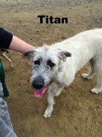 Irish Wolfhound, Loch Haven Dog Park, dogdevotionals.com, Christian Devotionals, Hoover AL