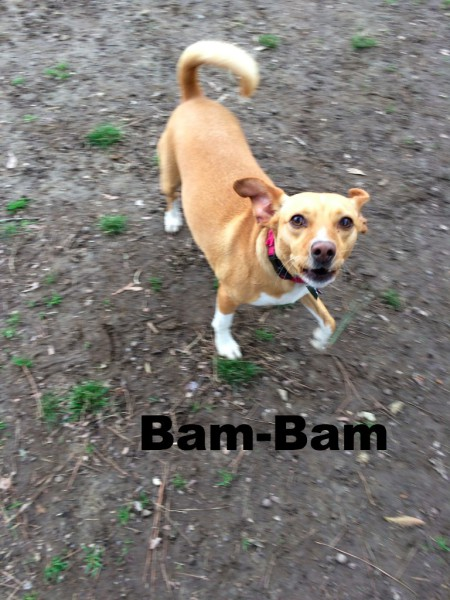 Rhodesian Ridgeback mix dog, pit bull mix Annie, Loch Haven Dog Park, Hoover Alabama, Ephesians 2:10, dog devotionals.com