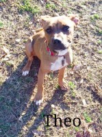pit bull mix, Loch Haven Dog Park, Hoover AL, Christian Devotionals, dogdevotionals.com