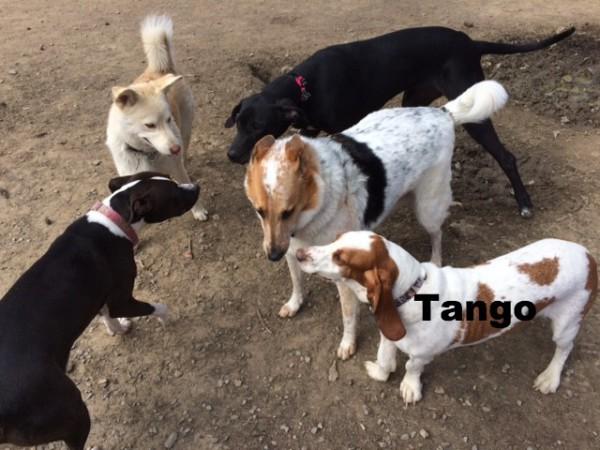 Dachshund mix dog, Jack Russell mix dog, Loch Haven Dog Park, Hoover Alabama, Ephesians 4:22-24