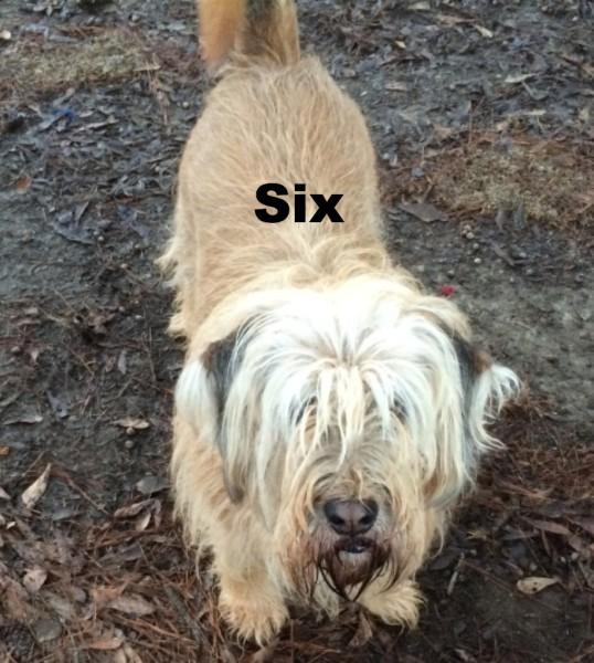 Mixed Bassett, mixed dog, medium sized blond dog, Loch Haven Dog Park, Hoover Alabama, dogdevotionals.com