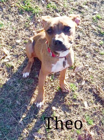 Boxer mix dog, pit bull mix Annie, Loch Haven Dog Park, Hoover Alabama, Romans 14:1-13, dogdevotionals.com