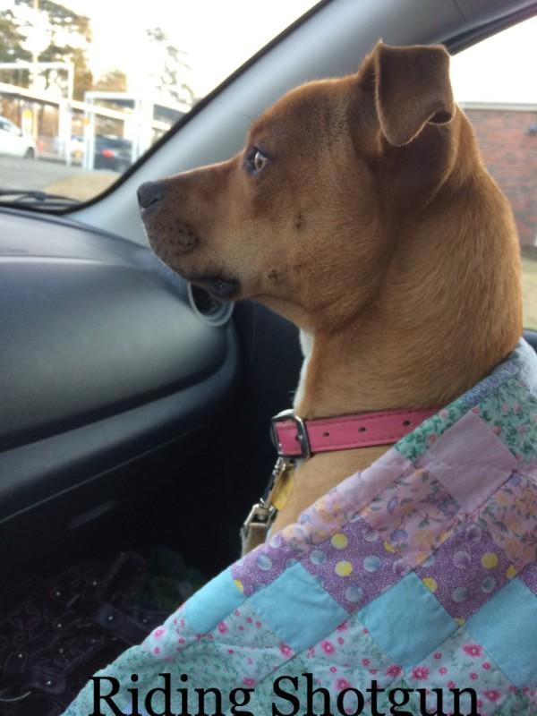 Yorkshire terrier mix, dogdevotionals.com, Loch Haven Dog Park, Hoover AL, Job 22:21