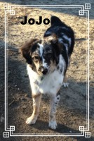 Australian shepherd mix, Loch Haven Dog Park, Christian Devotionals, dogdevotionals.com