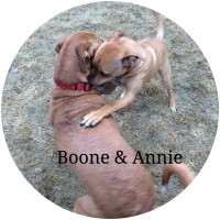 Rhodesian Ridgeback mix, pit bull mix, dogdevotionals.com, Christian devotionals, Hoover AL, Loch Haven Dog Park