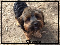 Yorkshire terrier mix, Yorkie, dogdevotionals.com, Christian devotionals, Loch Haven Dog Park, Hoover AL