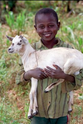 Goat for income