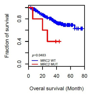 Endo180 mutations in lung cancer dramatically reduce survival