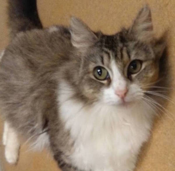 Caraway, 2 year old Female