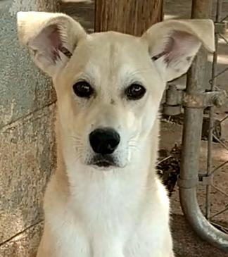 Hachi, 5 month old Male