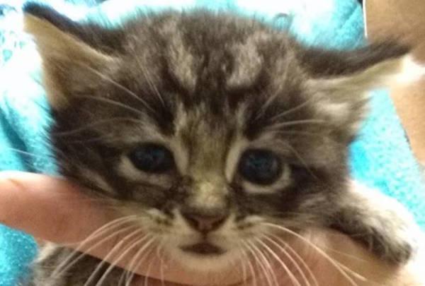 Caraway's 5 Week old Kitten 1