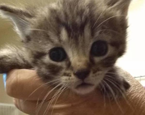Caraway's 5 week old Kitten 3
