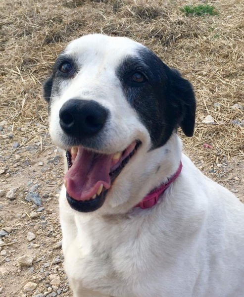Lacy, 6 year old Female