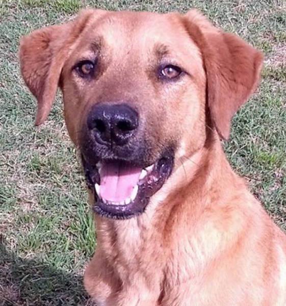 Oklahoma Dog, 1 year old Male