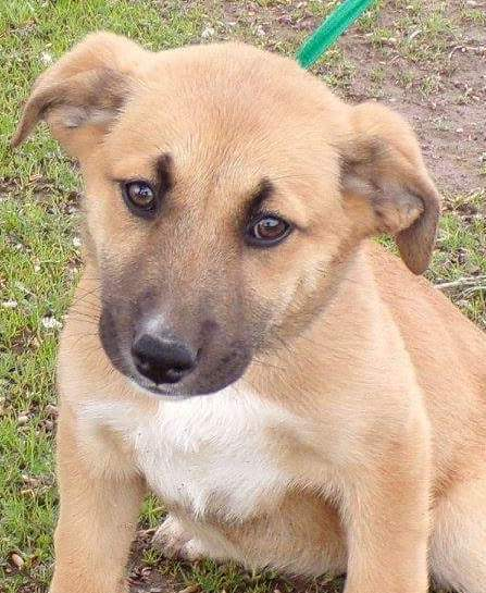 Twin, 4 month old Male, Shepherd mix
