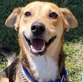 BJ, 2 Year old, Terrier mix, Male