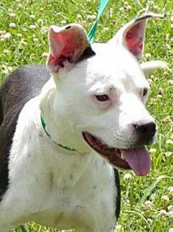 Cammie,  1Year old, Terrier mix, Female