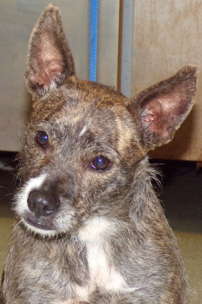 Carla, 3 Year old, Wire Haired Terrier, Female