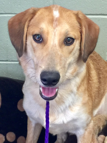 Catherine, 7 Month old, Golden Retriever mix, Female