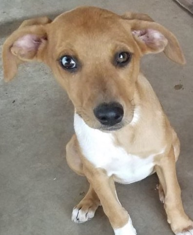 Jill, 14 Week old Female, Hound mix