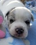 Jordan's Puppy #1