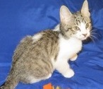 Hubble, 12 Week Old Male, DMH