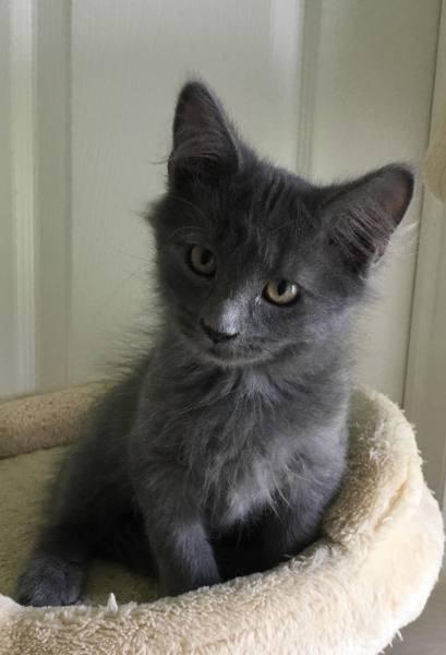 Ala's kitten4, 12 Weeks