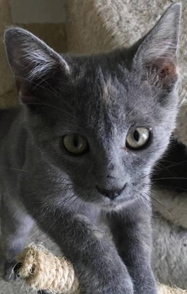 Betty Wilson's kitten3, 12 Weeks