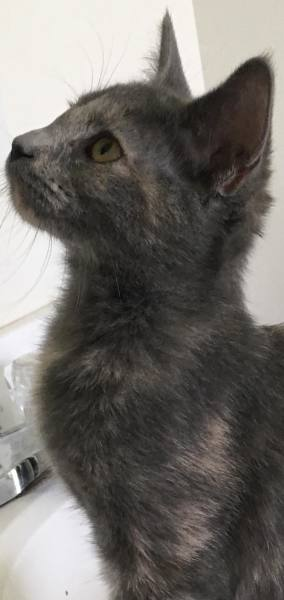 Betty Wilson's kitten2, 12 Weeks