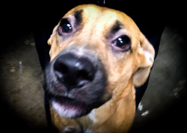 Charles, 5 month old Male, Hound mix