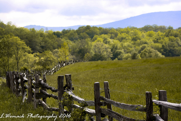 FENCE ALONG THE PARKWAY
