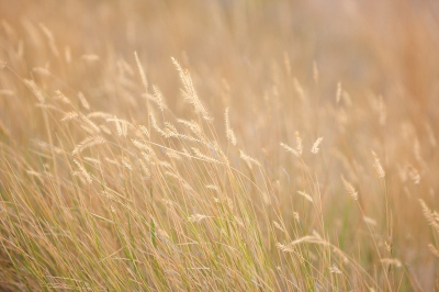 Feilds of grain