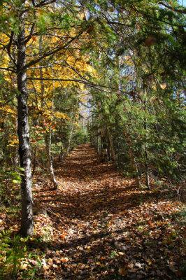 Hardwood Hills Trail at Widgawa