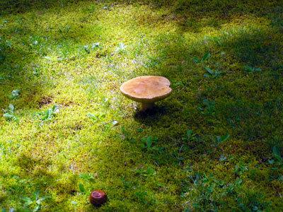 August Fungi Trail Widgawa
