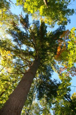 Widgawa Woods