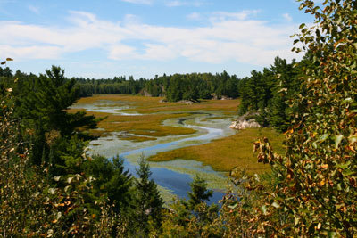 West River Beaver Meadow