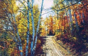 Widgawa Lane 1949