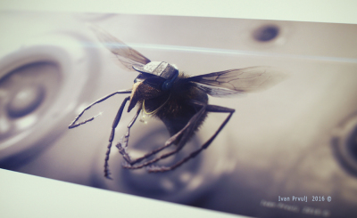 Amplified - Fly By,  photograph of the work