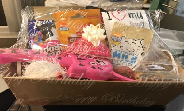 LUXURY CAT HAMPER BIRTHDAY/EASTER/CHRISTMAS