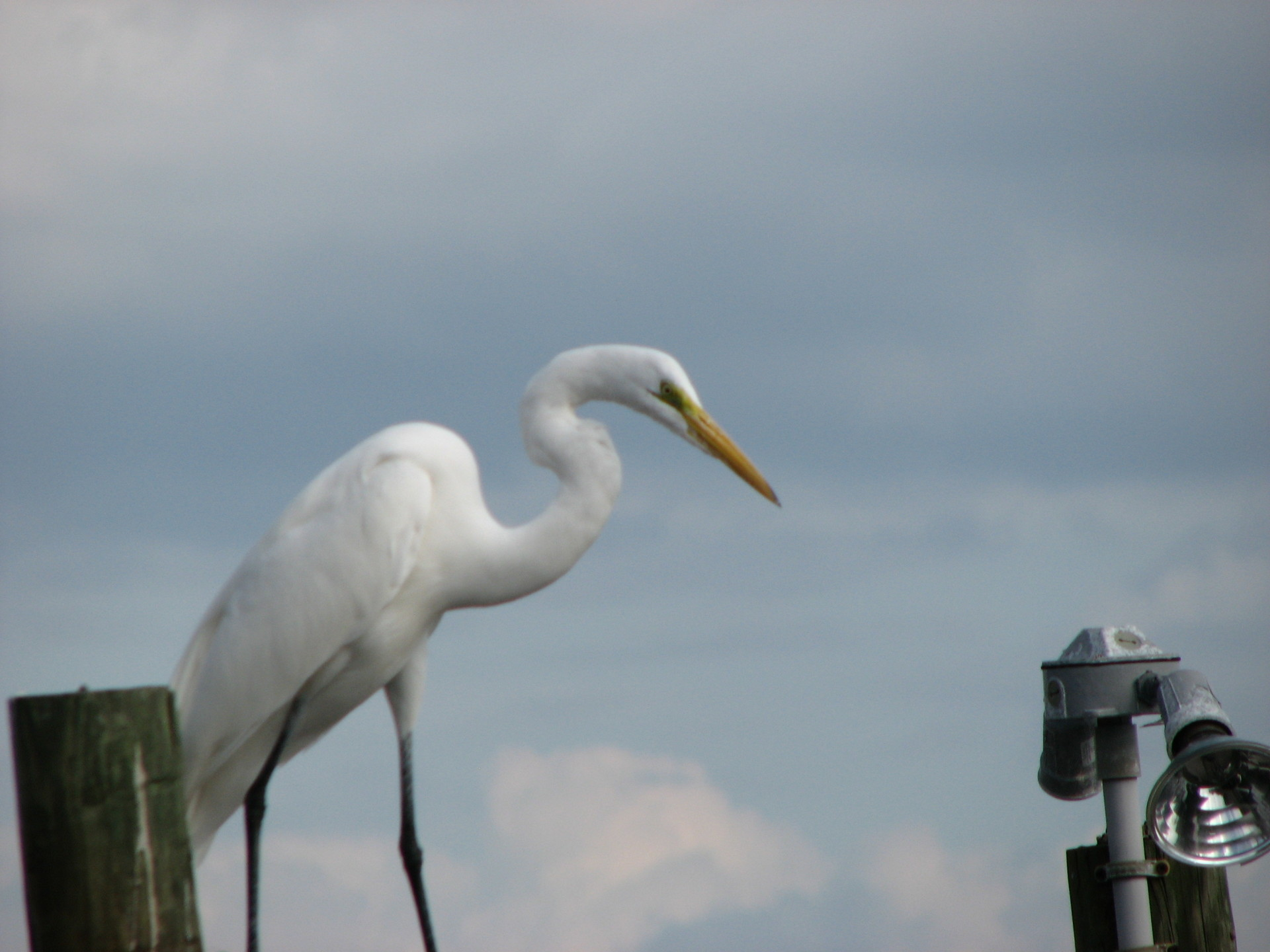 Bird Watching Florida FunBoat