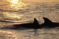 Dolphin Sunset Cruises