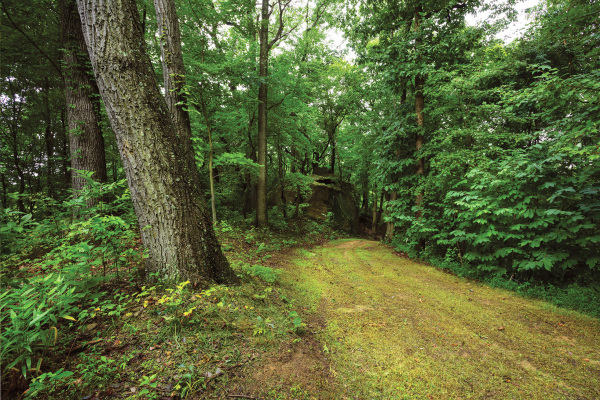 Well-Maintained Walking Trails