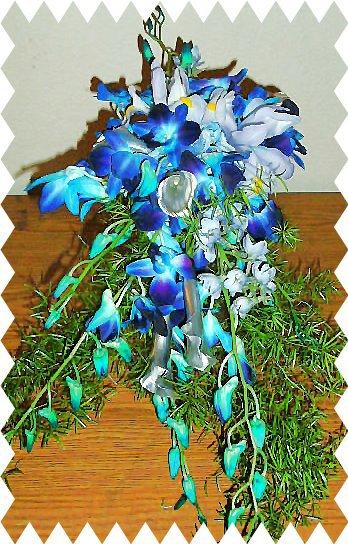 Blue dendrobium orchid cascade.
